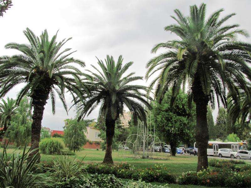 Адлер фото пальмы