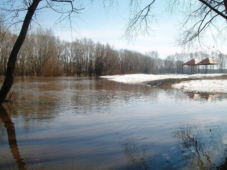 Ольховка весной фотографии