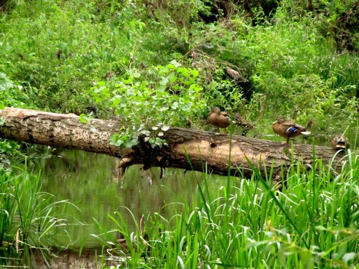 река Ольховка Стерлитамак летом фото